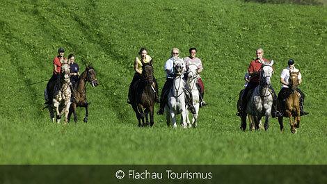 Reiten in Flachau